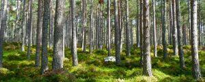 environmental social governance investing ESG
